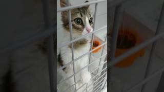 NUALA - in der Tierarztpraxis zum Einschläfern abgegeben