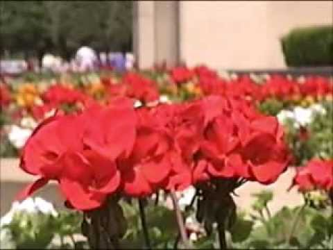 Boston, MA: Flowers at the Christian Science Center  (Summer 1989)