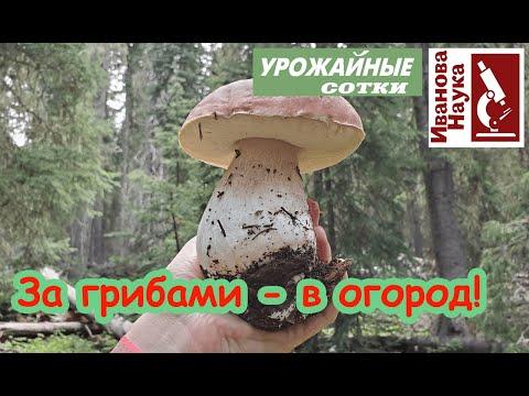 Вопрос: На что указывают грибы-поганки в вашем огороде или дачном участке?