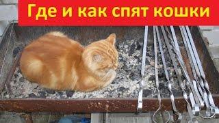 Где и как спят кошки. Смешное видео про кошек.