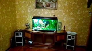 Мои аквасы 08 05 20