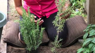 Proper Technique for Trimming Rosemary Plants : The Chef's Garden