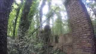 an authum walk at the lonnekerberg with the goPro