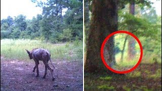 5 Mysterious Photos That Cannot Be Explained #2
