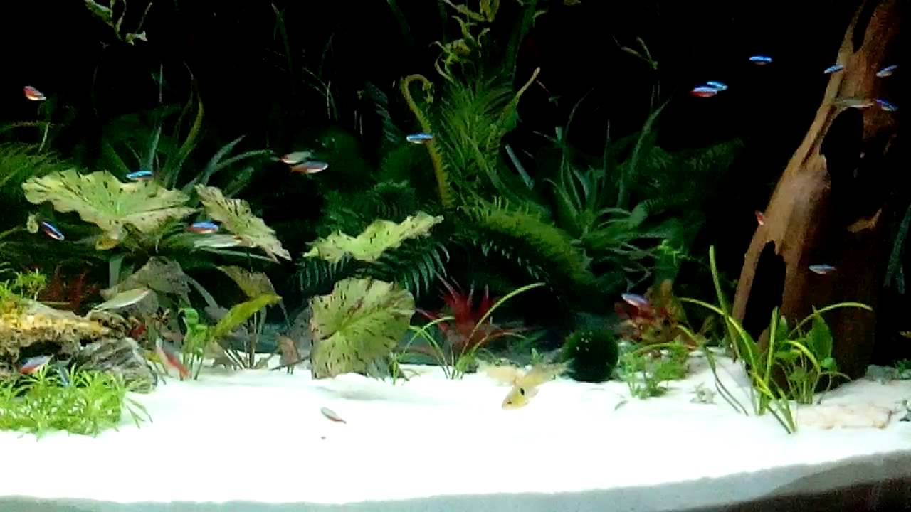 Popular Fish Tank Sand-Buy Cheap Fish Tank Sand lots from