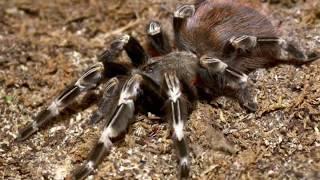 12 نوعا من أكبر العناكب في العالم لن تصدق أنها موجودة حقا..!!