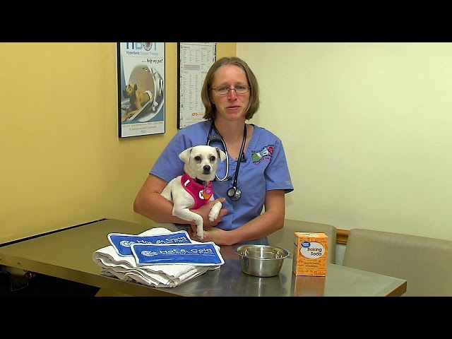 All About Pets - 8/2/18 Insect Stings, Audrey Gale-Dyer, DVM, Locum Emergency Veterinarian