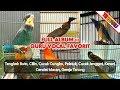 Terbaru Masteran Ampuh Kompilasi Suara Burung Masteran Favorit  Mp3 - Mp4 Download