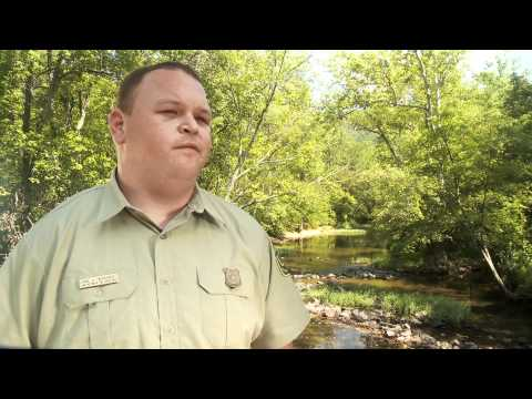 US Forest Service- Forestry