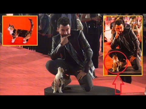 مش هتقدر تمسك نفسك من الضحك مع أشهر قطة في مهرجان القاهرة واللي عملته في النجوم