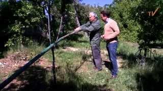 Chasse de la Grive à la glu au coeur de la Provence