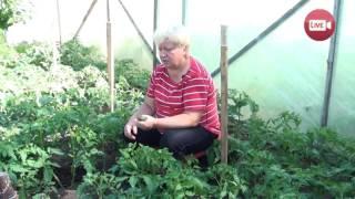 Персональный блог Светланы Кацаповой 42 вып (помидоры, огурцы, капуста, клубника)