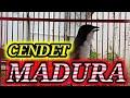 Cendet Madura Gacor Full Isian Tembakan Rapat Cocok Buat Pancingan Cendet Males Bunyi  Mp3 - Mp4 Download