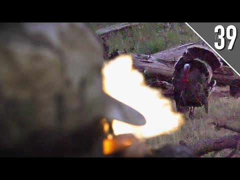 RIGHT DOWN THE BARREL!  (Perfect Turkey Hunt!) | Montana PUBLIC LAND Gobbler Off The Roost!