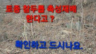 2월3월 두릅 촉성재배 made in china gmo…