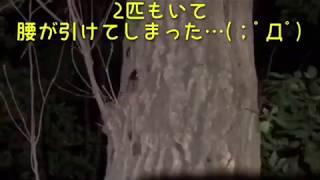 採集日 6/14 今回もノコギリクワガタをゲット! 尺が短いので番外編 コ...