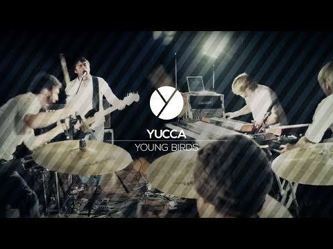 Yucca - Young Birds