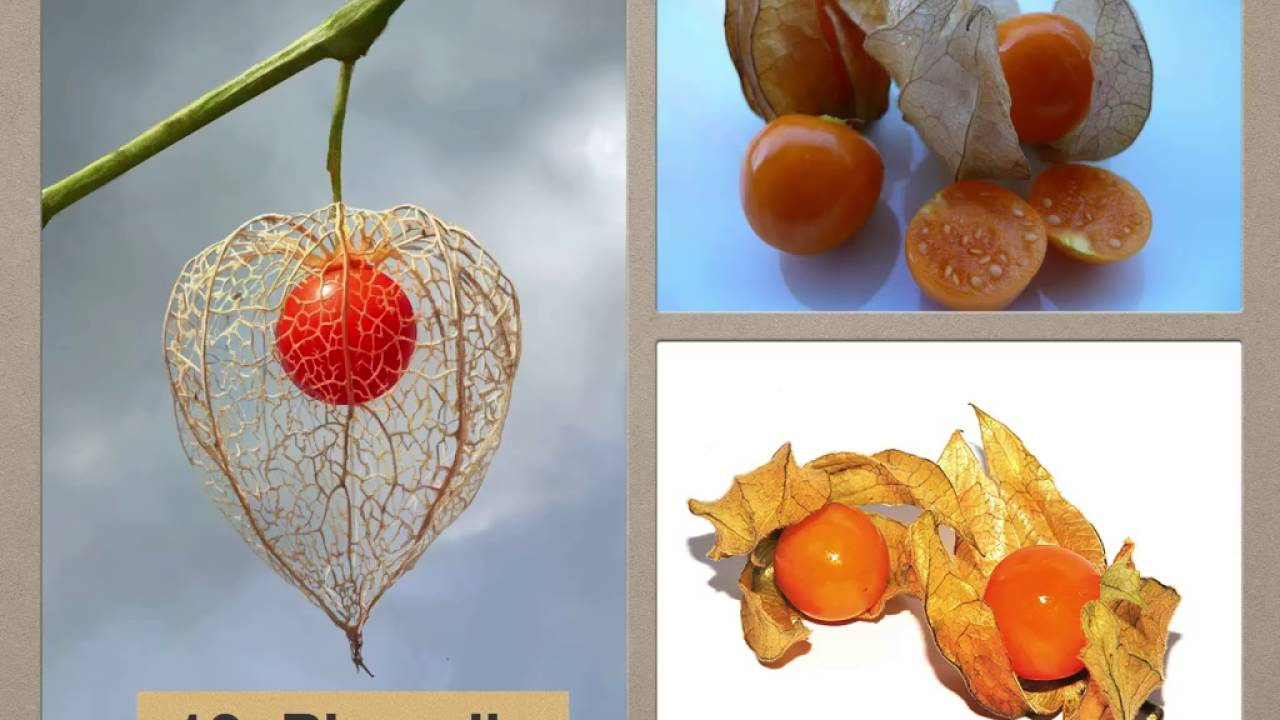 You got to try these top 20 most exotic fruits in the world youtube - Five of the most expensive fruits in the world ...