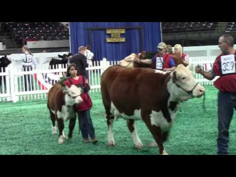 Beef Show, Freedom Hall West - November 17, 2016