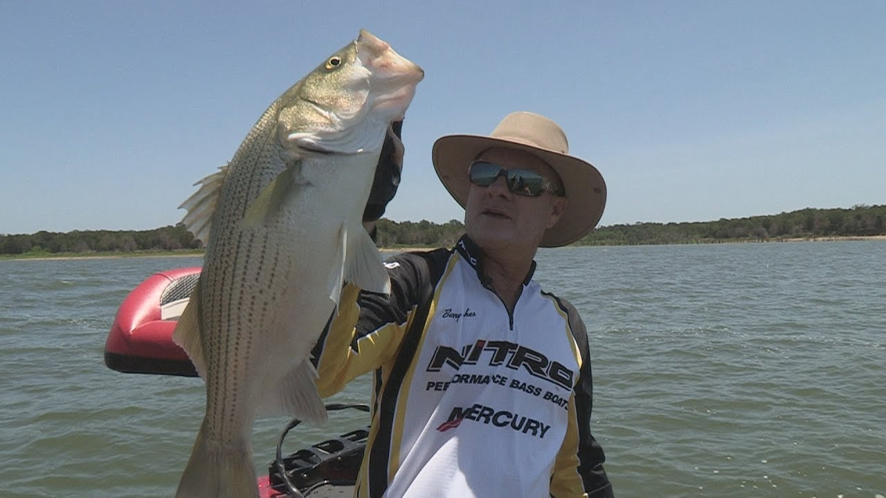 Southwest outdoors report 15 cooper lake texas hybrid for Fishing report texas