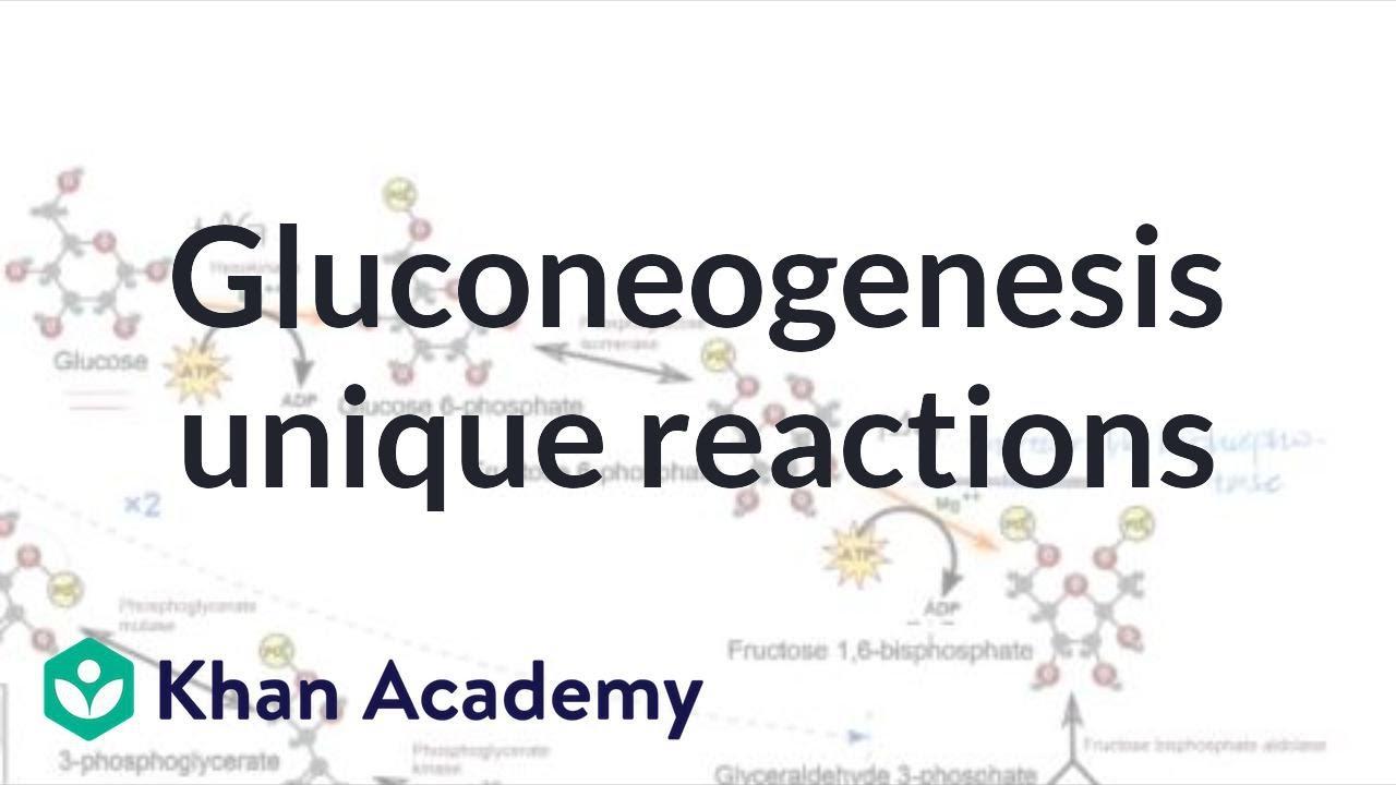 Gluconeogenesis: unique reactions | Biomolecules | MCAT | Khan Academy