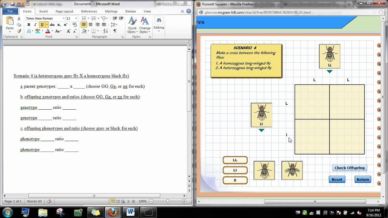 punnett square virtual lab - YouTube