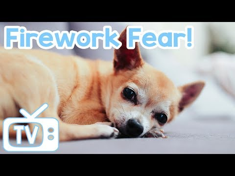 Dog TV: TV to Help with Firework Fear! Relax Your Dog on 4th of July Fireworks with this TV & Music!