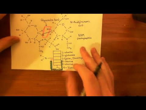 Vancomycin Resistant Enterococcus Faecalis Part 3