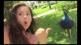 When Peacock gets mad||LoL So Funny