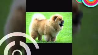 собаки друг человека ☆☆☆(Л.Е.В)