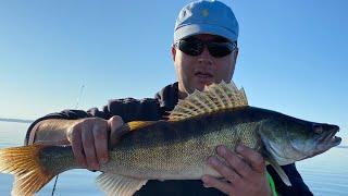 Рыбалка на судака на каневском водохранилище 10 07 2021