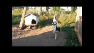 Уроки доброты. Даша и Пуля. Приют для бездомных животных КОВЧЕГ, г  Ярославль.