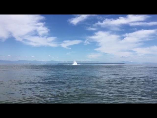 Humpback Whale Spotting