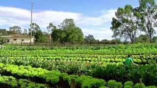 Cómo Administrar un Granja Agrícola Orgánica - TvAgro por Juan Gonzalo Angel
