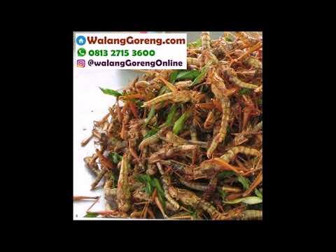 belalang-goreng-kirim-ke-lambangan-wonoayu-sidoarjo-081327153600