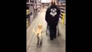 Rocky Road K9 Dog Training Myrtle Beach, Sc - Obedience Training At Lowes Home Improvement