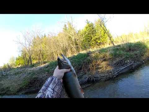 Трудовая рыбалка на форель. Сезон близится к завершению.