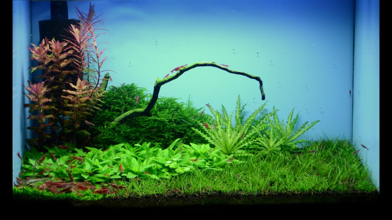 Nano Aquascape aquarium - Shrimp - YouTube