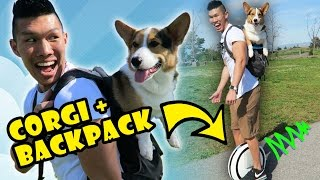 CORGI DOG IN BACKPACK RIDES NINEBOT HOVERBOARD - Life After College: Ep. 478 thumbnail