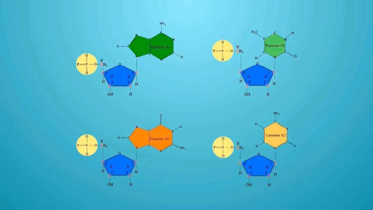 Download วิชาชีววิทยา - โครงสร้างของดีเอ็นเอ DNA structure