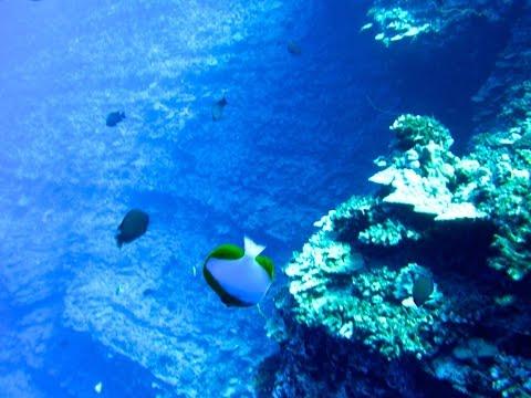 Molokini Back Wall Scuba Dive-Maui Hawaii with Humpack Whale Song!