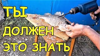 TOP 10 BEST LIFE FOR FISHING