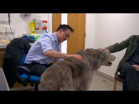 The Supervet Season 7 Episode 3 (s07e03) Bionic Special: Limb Salvage