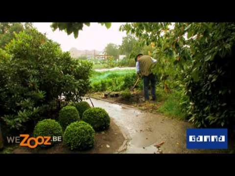 R aliser une boule de buis conseils bricolage jardin for Bricolaje de jardin