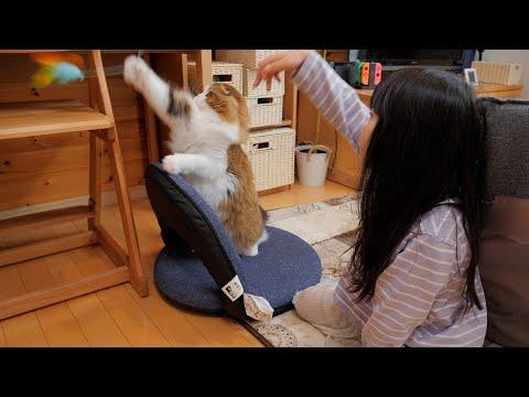 娘と猫じゃらし対決をする猫
