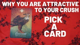 WHY you are attractive to your Crush!! Pick A Card