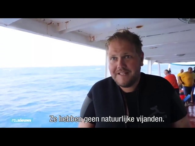 Lionfish removal from the Zenobia shipwreck, on RTL Nieuws (Netherlands)