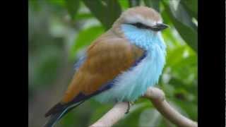 Video Colorful birds download MP3, 3GP, MP4, WEBM, AVI, FLV Januari 2018