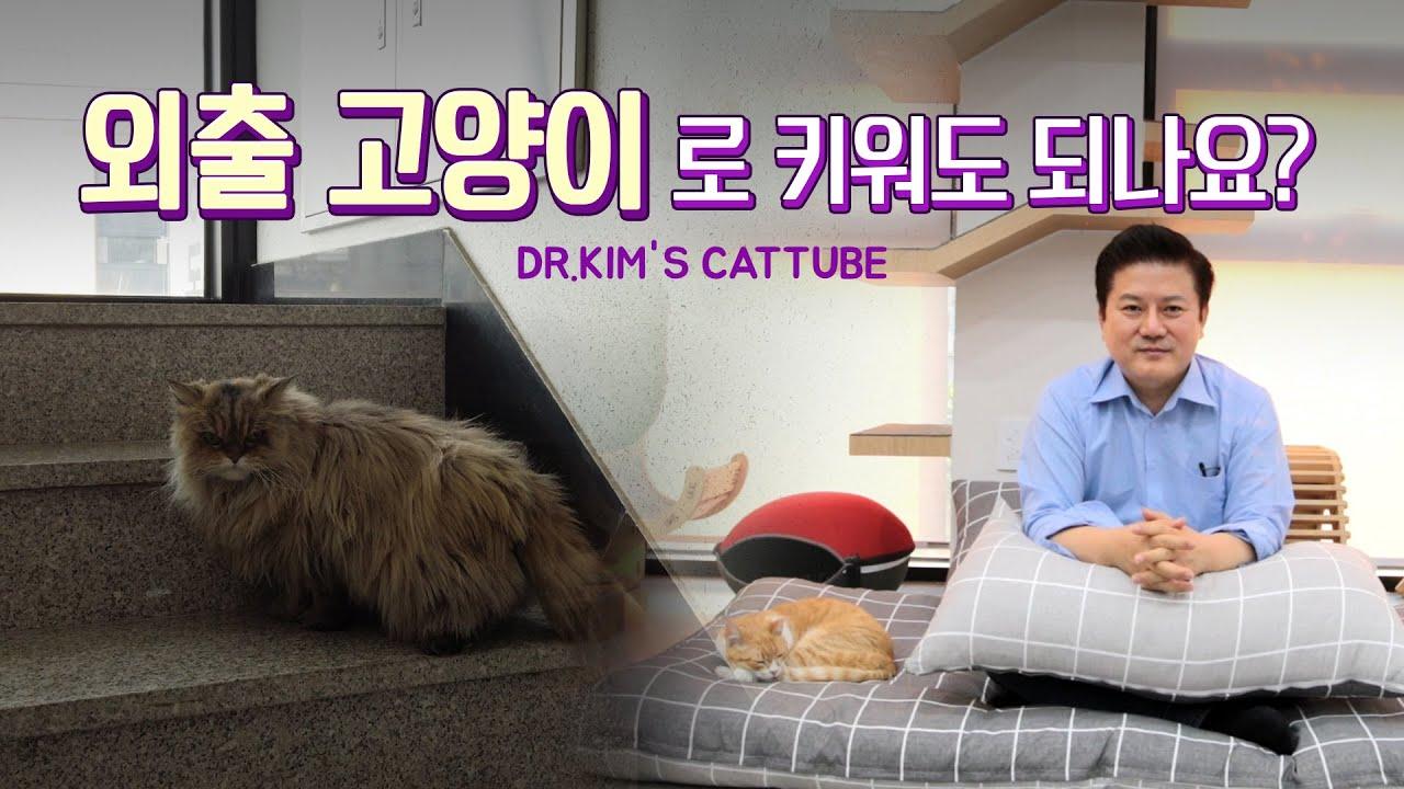 외출고양이로 키워도 되나요?