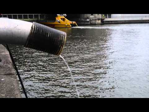 Catfish released into the Chicago River